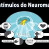 Os 6 Estímulos do Neuromarketing